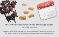 The 20 new horses in our care consume 5 bales of haylage a week, costing £25 each. This costs £125 a week, £500 a month, £6000 a year. Would you help a HAPPA horse this Christmas? Donations from people like you ensure that HAPPA can continue doing the work it does to rehabilitate and re-home the equines in its care.  Pleas follow the link and make a donation today. http://www.happa.org.uk/donate/