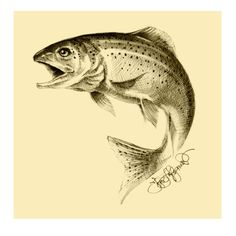 Trout Drawing for a Hotel in England