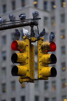 Ideas Street Art Black And White City Life Black And White City, Black And White Pictures, Urban Photography, Street Photography, Photography Lighting, Photo Hacks, Foto Transfer, Traffic Light, Photo B
