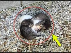 Kittens Found Wrapped Around Their Trembling Sister, Keeping Her Safe !! - YouTube