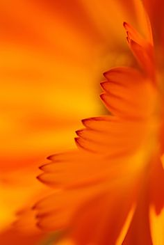Orange passion ✿⊱╮