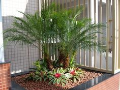 Dicas de paisagismo e jardinagem com palmeiras | Decorando Casas