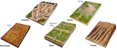 Drainage pattern a pattern created by stream erosion over time that reveals characteristics of the kind of rocks and geologic structures in a landscape region drained by streams. Geography Map, Earth Science, Cartography, Rocks And Minerals, Ecology, Fossils, Natural, Mini, Symbols