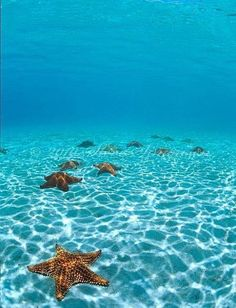 Pincushion sea stars- Leinster Bay, St John USVI / photography by Steve Simonsen. Virgin Islands National Park, Us Virgin Islands, St Thomas Virgin Islands, Foto Art, Ocean Life, Island Life, Marine Life, Oh The Places You'll Go, Under The Sea