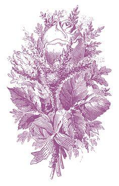 Printers Specimen – Beautiful Engraved Roses – 5 Options