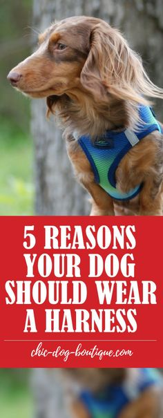 The number 1 dog walking tip for your pet's health and safety - use a dog harness! In this dog collar vs dog harness post, we'll explain 5 important reasons your dog should wear a harness while walking.
