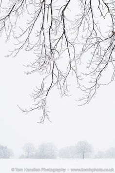 Frosty Branches. (30x42cm) Limited edition winter landscape colour photograph (Giclée) by Tom Hanslien on Artfinder. Driving along in the countryside of Bayern, Germany on a misty January morning in 2011 I came across this strikingly tranquil view. The fog makes these frosted branches stand out very nicely with faded line of trees in the background.