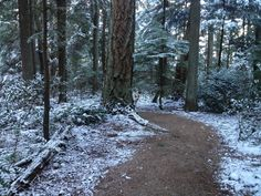 Pacific Spirit Park Vancouver British Columbia, Vancouver, Country Roads, Spirit, Park, Places, Outdoor, Outdoors, Lugares