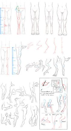 Anatomy for Animals