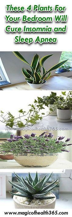 These 4 Plants For Your Bedroom Will Cure Insomnia and Sleep Apnea #NaturalInsomniaCures