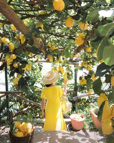 amalfi coast travel guide - lemon grove farm tour in yellow maxi dress Italy Honeymoon, Honeymoon Destinations, Italy Vacation, Lemon Farm, Amalfi Coast Hotels, Amalfi Coast Wedding, Italian Summer, Positano, Mellow Yellow
