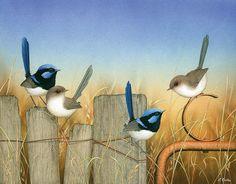 Australian Animals, Australian Art, Watercolor Bird, Watercolor Paintings, Detailed Paintings, Botanical Drawings, Bird Art, Beautiful Birds, Cat Art