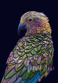 Australia artist Lamai Anne fine art prints for your home interior. Art Maori, Zealand Tattoo, New Zealand Art, Nz Art, Guache, Tier Fotos, Watercolor Bird, Bird Drawings, Exotic Birds