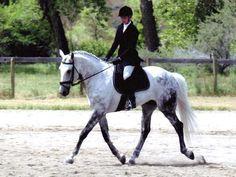 irish sport horses - Google Search