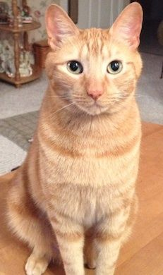 My cat Sam. Sally, Slatington, PA. 8/25/12.