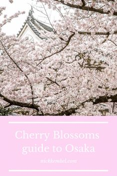 Our Incredible Osaka Cherry Blossoms Experience Cherry Blossom Season, Sakura Cherry Blossom, Cherry Blossoms, Solo Travel, Asia Travel, Japan Travel Guide, Travel Tips, Travel Essentials, Travel Destinations