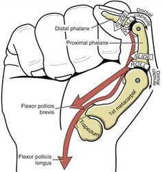 Thumb flexion