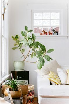 Plant-o-Pedia: Rubber Tree via The New Bohemians Book. Love the colorful basket peeping through. #JungalowStyle