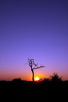 Early Morning Glow - Madikwe Game Reserve, South Africa