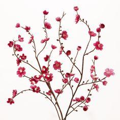 Pink Velvet Plum Blossoms, Set of 2 from Cost Plus World Market Artificial Floral Arrangements, Artificial Silk Flowers, Silk Flower Arrangements, Fake Flowers, Fabric Flowers, Simple Flowers, Pink Fabric, Silk Flower Bouquets, Pink Velvet