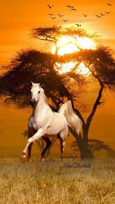 Welcome to my Workspace Beautiful Arabian Horses, Most Beautiful Horses, Majestic Horse, All The Pretty Horses, Animals Beautiful, Horse Photos, Horse Pictures, Animals And Pets, Cute Animals