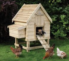 http://www.hallsgreenhouses.co.uk/upload/media/Rowlinson/2011/Small-Chicken-Coop.jpg