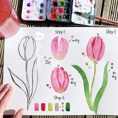 tulips garden care Terrific Screen Tulip watercolor Tips Extensive live the tulip ! Grow this kind of vibrant colored jewel cell phone . a beautiful exhibit Watercolor Flowers Tutorial, Easy Watercolor, Watercolour Tutorials, Watercolor Cards, Floral Watercolor, Watercolor Painting Techniques, Watercolour Painting, Painting & Drawing, Watercolors