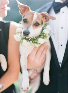 Pets at Weddings Pretty Animals, Cute Baby Animals, Animals And Pets, Cute Dogs And Puppies, I Love Dogs, Doggies, Dog Wedding, Wedding Engagement, Engagement Session