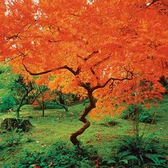 Maple | 10 Best Trees and Shrubs for Fall Color | This Old House