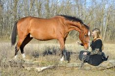Alkán Akhal Teke, Horses For Sale, Equestrian, Animals, Animales, Animaux, Horseback Riding, Animal, Animais