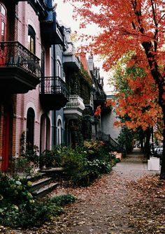 Montreal in the fall