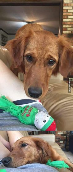 Dog brought human a toy because it knew she was feeling unwell