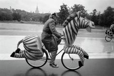Zebra Bicycle....Hmmm this doesnt make sense....quite cruel,why is my body in half?