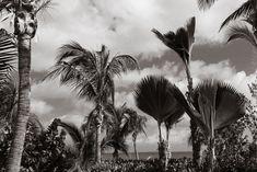 anguilla-travel-postcard-black-and-white-1