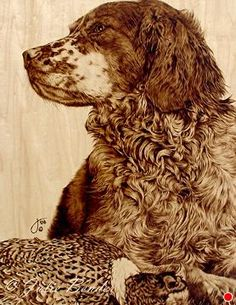 """Contented (Brittany spaniel with rooster pheasant) by julie bender Pyrography ~ 11"""" x 14"""""""