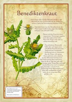 Precious Tips for Outdoor Gardens - Modern Healing Herbs, Medicinal Plants, Nature Plants, Garden Plants, Herbs For Health, Diy Projects For Beginners, Magnolia Pearl, Diy Chicken Coop, Kitchen Witch
