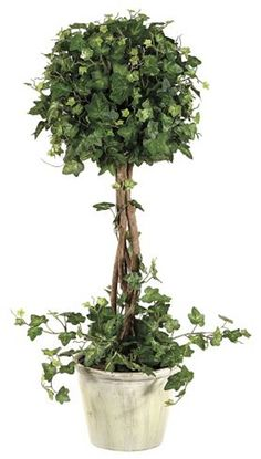 Ivy Topiary 22in | Havertys Furniture