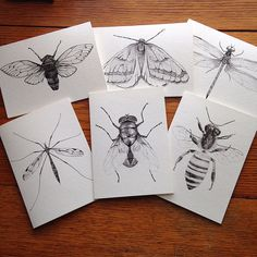 Cicada, Dragonfly, Bee, Crane Fly, Fly, Moth, Entomology, Insect 5 x 7 Black and White Illustrated Blank Cards, set of 6.