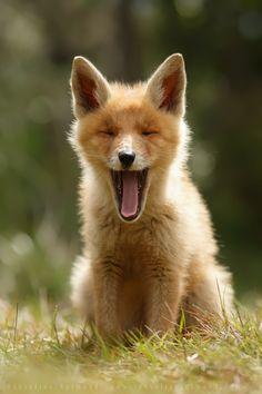 Heartwarming Photos of Adorable Baby Foxes - My Modern Metropolis
