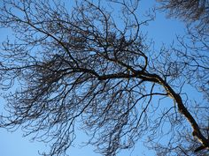 Beautiful blue sky through the branches