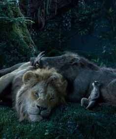 """Can you feel the fright tonight? A poster featuring Pumbaa in the new """"Lion King"""" live-action film is here, and fans aren't too sure. Watch The Lion King, Le Roi Lion Disney, Disney Lion King, Walt Disney, The Lion Sleeps Tonight, Lion King Musical, Lion King Movie, Hakuna Matata, Wallpaper Iphone Disney"""