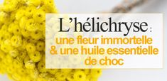 L�hélichryse : une fleur immortelle & une huile essentielle de choc Elixir Floral, Nutrition, Food, Herbs, Doterra Essential Oils, Diet Supplements, Bach Flowers, Organic Beauty, Beauty Secrets