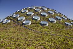 California Academy of Sciences Living Roof by SWA Group 01 « Landscape Architecture Works | Landezine Landscape Architecture Works | Landezi...