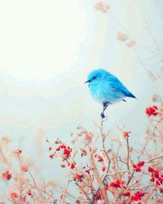 """"""" Özümden âleme kuşlar uçurdum.. Hangisi menzile vardı bilmem ki..? """"  Abdurrahim Karakoç"""