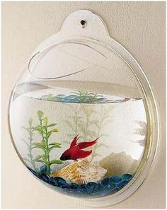Need two to side by side to watch them show of for each other. This Wall Mount Beta Fish Bubble Aquarium Tank is so much fun! Get it for $12.13!