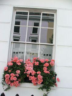 Window in Pimlico, SW1
