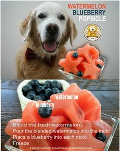 Healthy Dog Treats How to make Watermelon Blueberry Popsicle - Chewy Banana dog treats are easy to make. You could use a dehydrator, but your oven is an alternative method. The trick is setting your oven at a low temperature. Puppy Treats, Diy Dog Treats, Puppy Food, Homemade Dog Treats, Dog Treat Recipes, Healthy Dog Treats, Summer Dog Treats, Frozen Dog Treats, Dog Popsicles