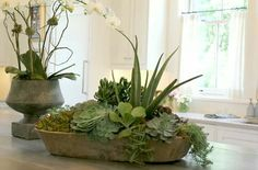 Faux Succulents with green moss