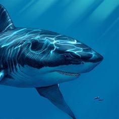 Megalodon went extinct million years ago, but our fascination with the largest shark that ever lived is timeless. Meet the largest predator in vertebrate history. Prehistoric World, Prehistoric Creatures, Underwater Creatures, Ocean Creatures, Megaladon Shark, Blue Jurassic World, Types Of Sharks, Cool Sharks, Shark Pictures