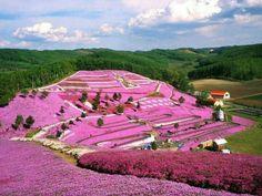 Hokkaido Prefecture, Japan